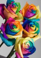 Real Rainbow Roses by RAINBOWedROSES