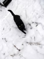 My cat in the snow by AardbeiElfje