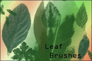 Leaf Brushes by joannastar-stock