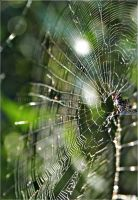Shining Webs of Natures Lace by GrotesqueDarling13