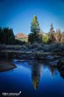 Lone Pine Reflection by mjohanson