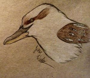Laughing Kookaburra by Ticklicous