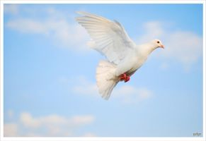 dove by galgolan