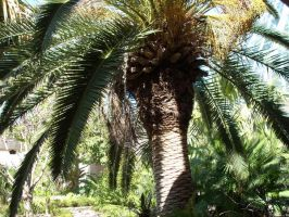 Palms in the Sun 2 by Enalon