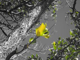 yellow leaves by amormimosse