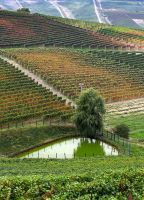 Beautiful vineyards by Suppi-lu-liuma