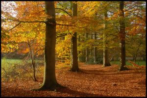 Autumn colours one more time by jchanders