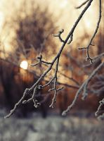 Winter sun. 2 by Alhor-Ern