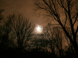 Moon Over Marin by sparklehorse