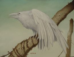 White Raven by DH666