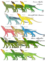 Ah'gohris Sub-Species and Color Sheet by aireona93