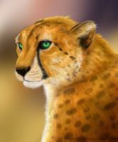 Cheetah Commission - Kweli by KhaliaArt