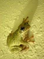 Frog on my Wall by Raulboy