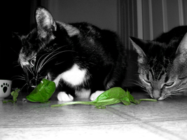 spinach cats by vampirate777