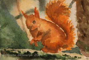 Watercolor and Ink #13 - Squirrel by Oksana007