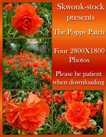 The Poppy Patch by skwonk-stock
