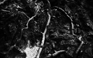 Dark Roots by SxyfrG