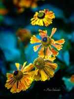 Summertime colours(III). by Phototubby