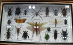 Bug Collection by Undistilled
