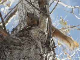squirrel-serial-7Time is no longer so bye by sonafoitova