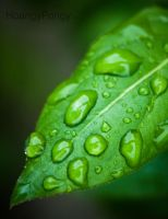 Leaf Droplets by HoangyPongy