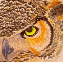 Great Horned Owl by Trista-Willows