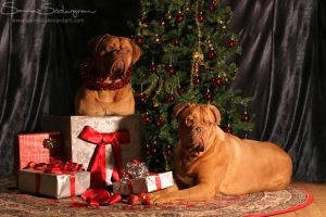 Christmas, with a side of Mastiff by SaNNaS
