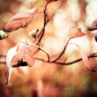 colours of autumn by Wurstgulasch