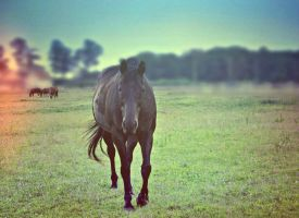 Horseshoes And Clover by suezn