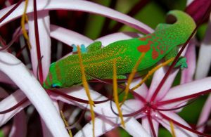 Day Gecko by cedarspirit