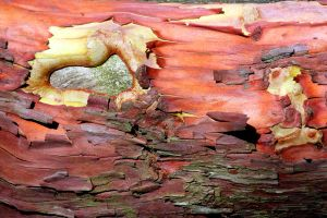 Exotic Bark Texture Stock by aegiandyad