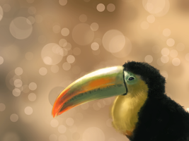 Toucan by Ceruleano