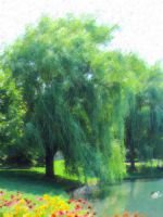 Willow Tree by bluestone78