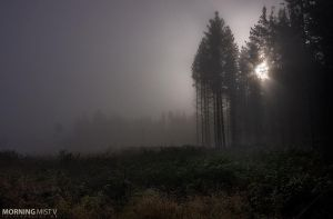 Morning Mist V by CalleHoglund