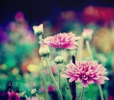 ..Colorful flowers by addy-ack