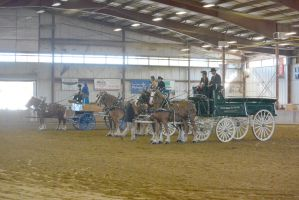 Topsfield Fair, Horse Handler Competition 3 by Miss-Tbones