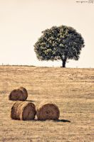 Summer in the countryside. by MarioGuti