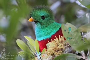 Quetzal Close-up by mydigitalmind