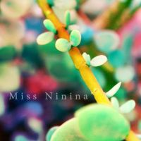 Colorful Leaves by Miss-NiNiNa