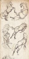 Animal Studies . Horses by Sorren-Chan