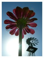 Relativity by manticor
