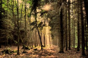 Mornings in forest by tomsumartin