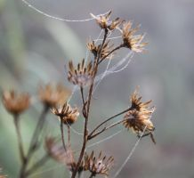 Winter melody by sbluesky