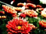 Bright Flowers by Isika