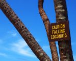 falling coconuts by xthumbtakx