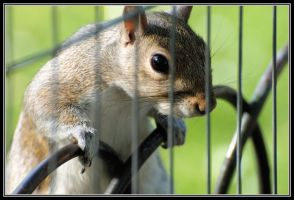 Free the squirrel by Rajmund67