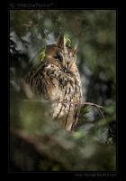 TheOwl.. by tisbone