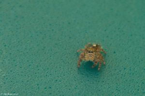 Jumping Spider on my Mail Box... by SnakeGeisha