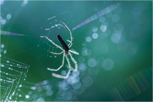 Spider by ClaudeG