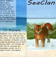 Official SeaClan ref for RedBlaize by DracKeagan